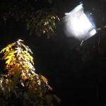 Illuminazione Notturna